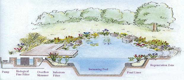 Natural Swimming Pool Diagram